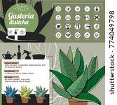 template for indoor plant... | Shutterstock .eps vector #774049798