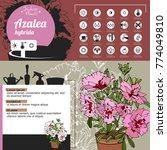 template for indoor plant... | Shutterstock .eps vector #774049810