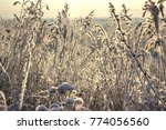 dry grass in frost  in the... | Shutterstock . vector #774056560