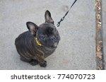 Cute Puppy French Bulldog...
