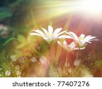 White Tinny Flower Under The...