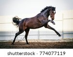 thoroughbred horse action | Shutterstock . vector #774077119