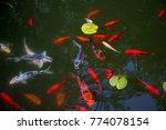 beautiful japanese koi fish | Shutterstock . vector #774078154