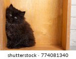 Stock photo young black fluffy kitten 774081340