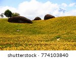 Small photo of The broad and undulate beautiful farmland of Citron daylily with blue sky and some white clouds background at Chihkeshan in Hualien, Taiwan. ( Hemerocallis citrina ) And the three famous huge stones.