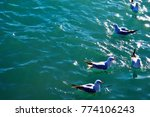 a flock of seagulls on the sea...   Shutterstock . vector #774106243