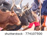 zeb  market in ambalavao.... | Shutterstock . vector #774107500