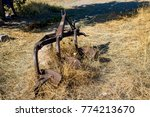 an old retro rusted farm...   Shutterstock . vector #774213670