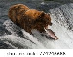 Bear About To Catch Salmon In...