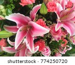 close up of pink lily flowers... | Shutterstock . vector #774250720