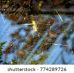 spider net in darjeeling jungle. | Shutterstock . vector #774289726
