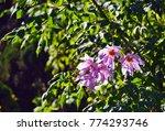 dahlia flower in park. | Shutterstock . vector #774293746