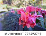 different flowers in darjeeling ... | Shutterstock . vector #774293749