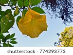 different flowers in darjeeling ... | Shutterstock . vector #774293773