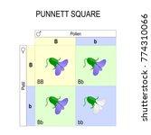 punnett square. genetics.... | Shutterstock .eps vector #774310066