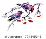 watercolor bird sitting on...   Shutterstock . vector #774345343