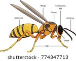 vector illustration of an... | Shutterstock .eps vector #774347713