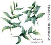 watercolor eucalyptus branch... | Shutterstock . vector #774398458