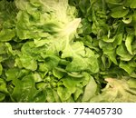 These Are Salad Leafs Which Ar...