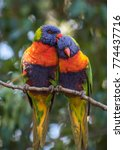 Two Colourful Parrots Perched...