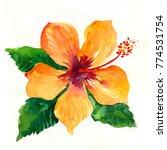 yellow watercolor hibiscus. | Shutterstock . vector #774531754