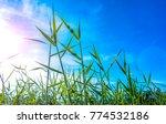 Grass Sky Concept Grass Blue - Fine Art prints