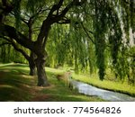 Green Willow Tree Over Small...