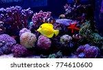 coral reef aquarium scene | Shutterstock . vector #774610600