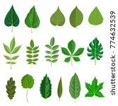 vector green leaves of...   Shutterstock .eps vector #774632539