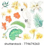 collection of tropical hand... | Shutterstock .eps vector #774674263