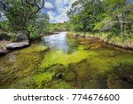 cano cristales  river of five... | Shutterstock . vector #774676600