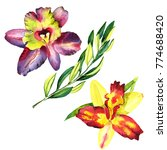 watercolor orchid flowers and... | Shutterstock . vector #774688420