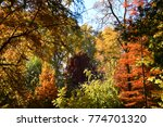 trees with many colors on a... | Shutterstock . vector #774701320