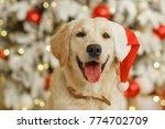 golden retriever in santa hat ... | Shutterstock . vector #774702709