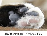 black and white cat paw | Shutterstock . vector #774717586