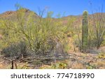 saguaro national park is a... | Shutterstock . vector #774718990