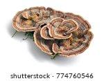 trametes versicolor mushroom ... | Shutterstock . vector #774760546