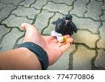 Pigeon Dove Eating Bread Hand - Fine Art prints