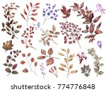 watercolor botanical collection.... | Shutterstock . vector #774776848