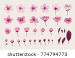 set. pink cherry flowers ... | Shutterstock .eps vector #774794773