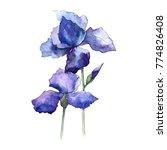 wildflower iris flower in a... | Shutterstock . vector #774826408