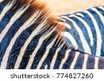close up of vertical black and... | Shutterstock . vector #774827260