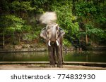 Small photo of Beautiful Image. Elephant portrait. Elephant with open mouth and disgorge soil on nature green background in National park of Thailand.
