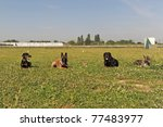 Five Dogs Laid Down In The Grass