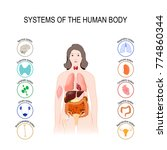 systems of the human body ... | Shutterstock .eps vector #774860344