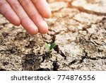 hands holding a tree growing on ... | Shutterstock . vector #774876556