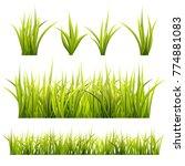 grass  and  herbs  summer... | Shutterstock .eps vector #774881083