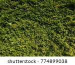 green leafs background | Shutterstock . vector #774899038