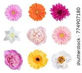different beautiful spring... | Shutterstock . vector #774907180