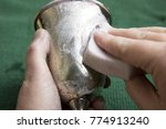 Small photo of Close up of woman's hands using sponge to polish tarnish off silver goblet.